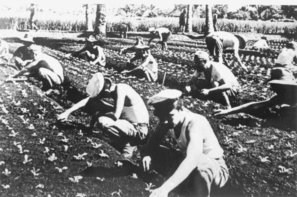 """Krijsgevangenkamp in Tjimahi werden gevangenen te werk gesteld bij boerderij """"Zonnehoeve"""""""