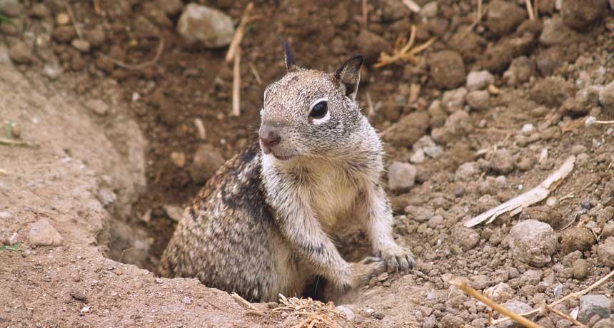 notebook_itsalive_squirrel_3